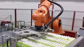 Industrial robots for eggs palletizing